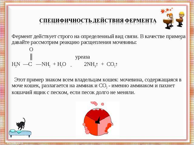Фермент действует строго на определенный вид связи. В качестве примера давайт...