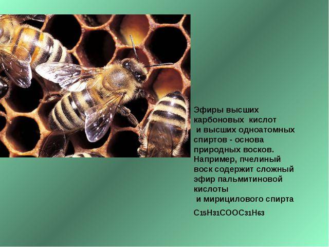 Эфиры высших карбоновых кислот и высших одноатомных спиртов - основа природны...