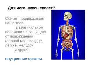 Скелет поддерживает наше тело в вертикальном положении и защищает от поврежде