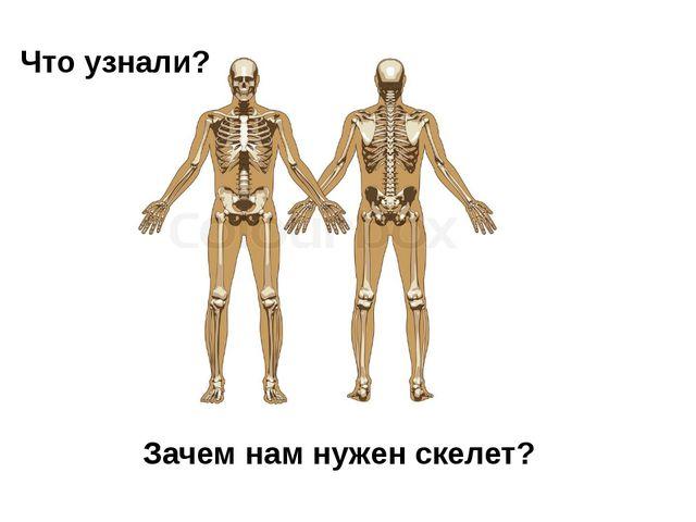 Что узнали? Зачем нам нужен скелет?