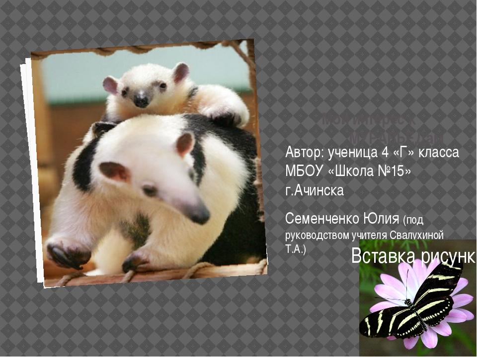 Мой интерес к МУРАВЬЕДам Автор: ученица 4 «Г» класса МБОУ «Школа №15» г.Ачин...