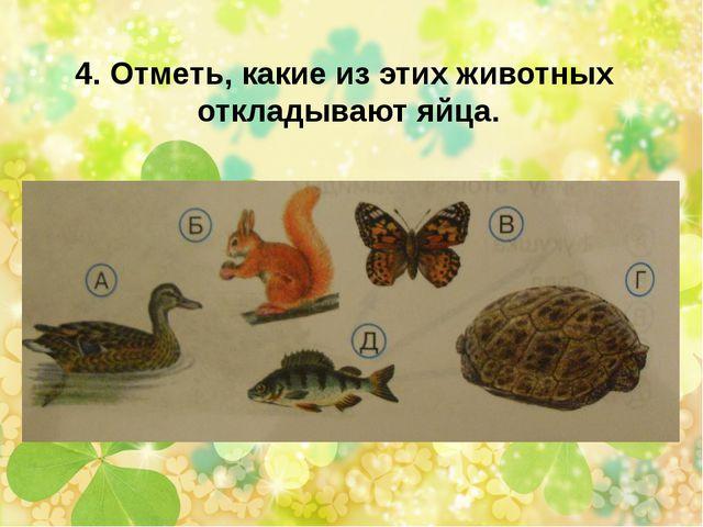 4. Отметь, какие из этих животных откладывают яйца.