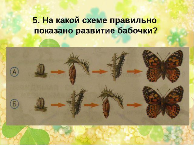 5. На какой схеме правильно показано развитие бабочки?