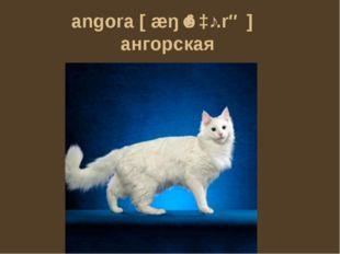 angora [æŋˈɡɔː.rə] ангорская