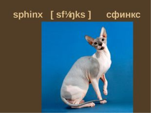sphinx [sfɪŋks] сфинкс