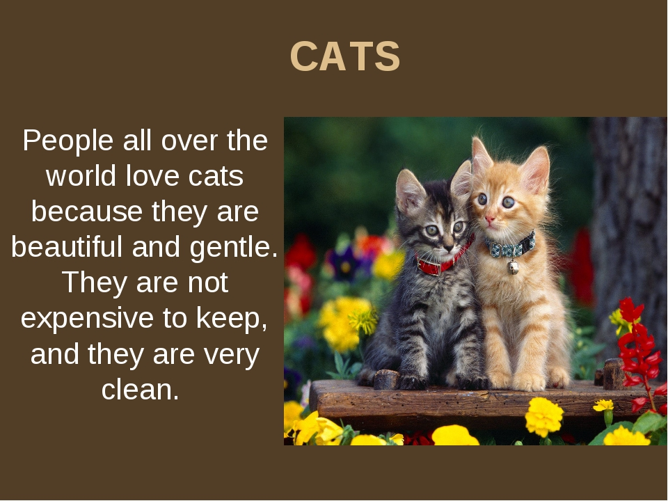 CATS People all over the world love cats because they are beautiful and gentl...