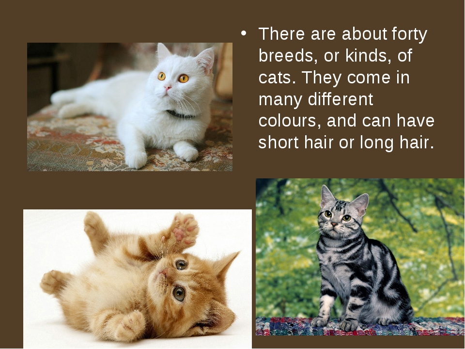 There are about forty breeds, or kinds, of cats. They come in many different...