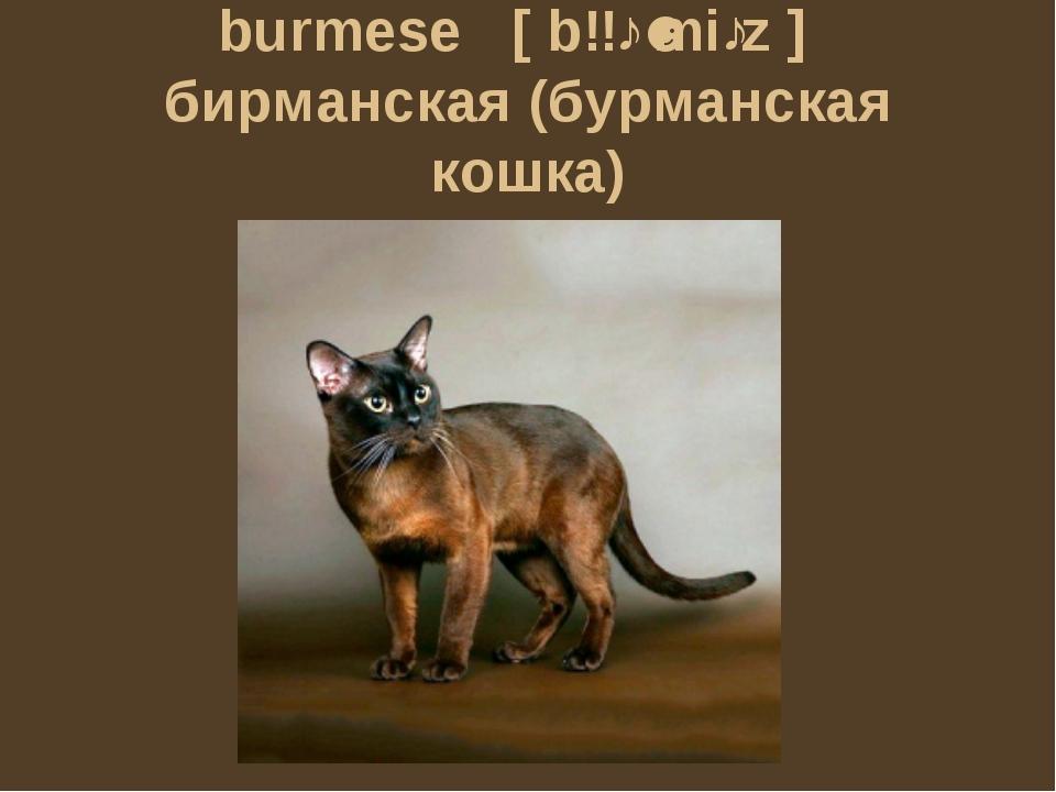 burmese [bɜːˈmiːz] бирманская (бурманская кошка)