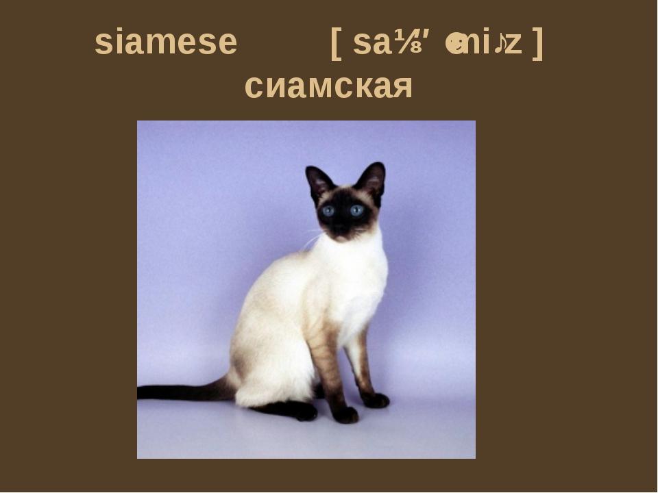 siamese [saɪəˈmiːz] сиамская