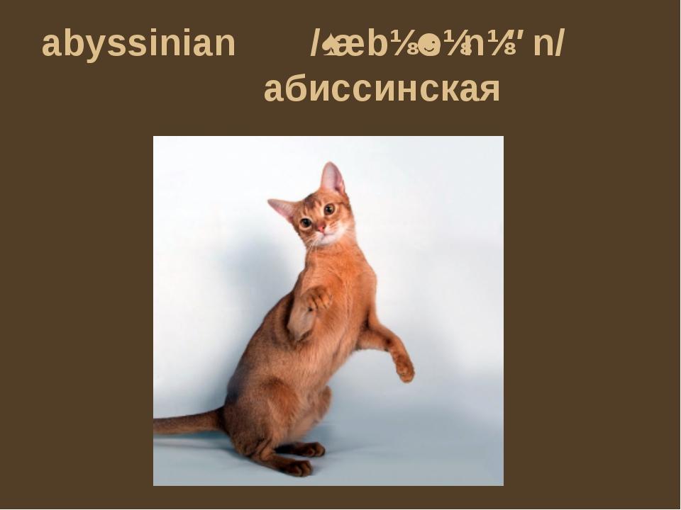 abyssinian /ˌæbɪˈsɪnɪən/ абиссинская