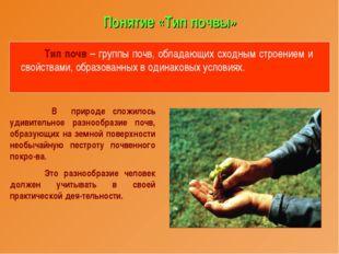 Понятие «Тип почвы» Тип почв – группы почв, обладающих сходным строением и св