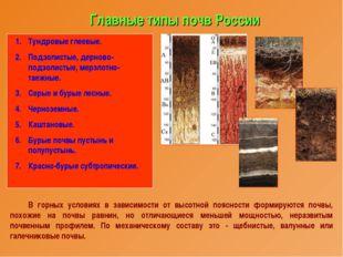 Главные типы почв России Тундровые глеевые. Подзолистые, дерново-подзолистые,