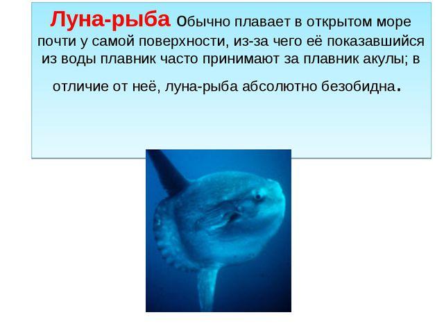 Луна-рыба обычно плавает в открытом море почти у самой поверхности, из-за чег...