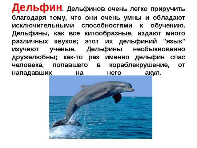 Дельфин. Дельфинов очень легко приручить благодаря тому, что они очень умны и...