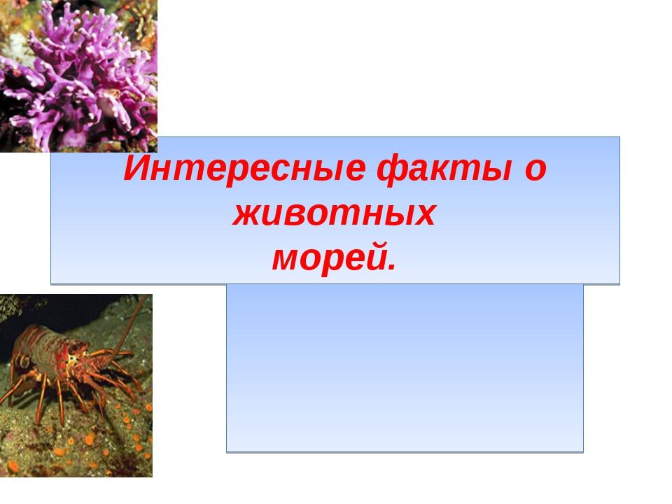 Интересные факты о животных морей.