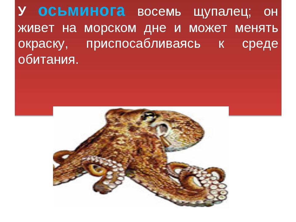 У осьминога восемь щупалец; он живет на морском дне и может менять окраску, п...