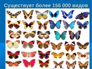 Существует более 156 000 видов