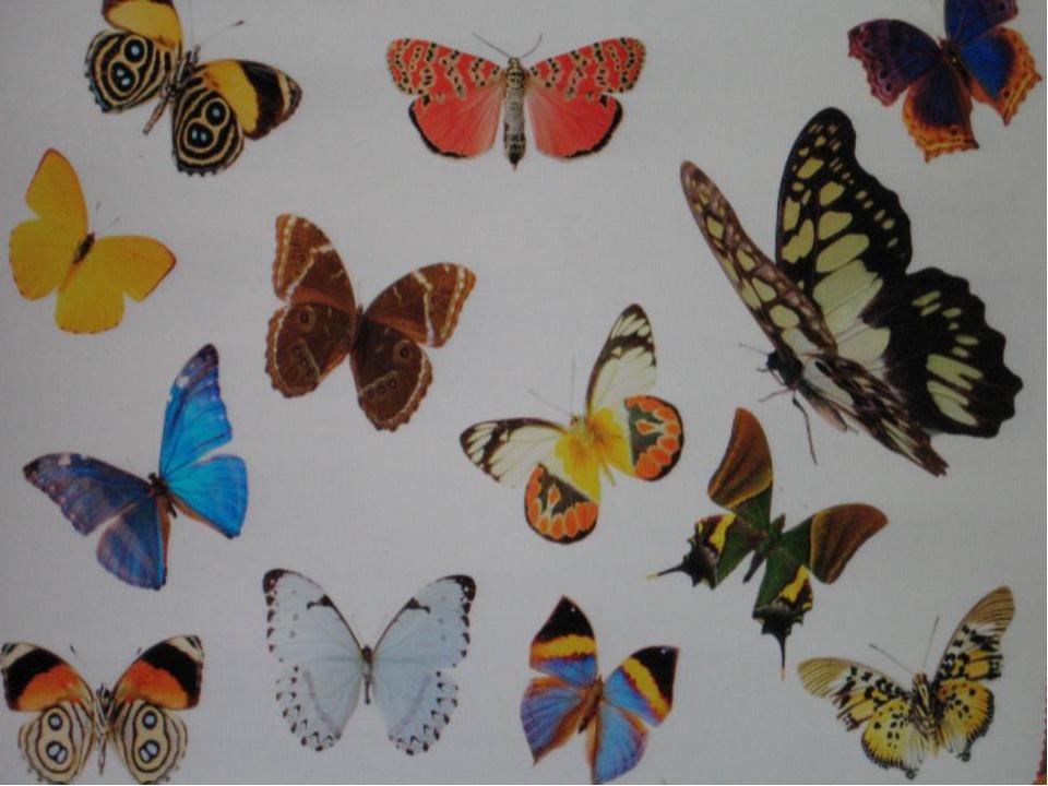 с бабочкой знакомство