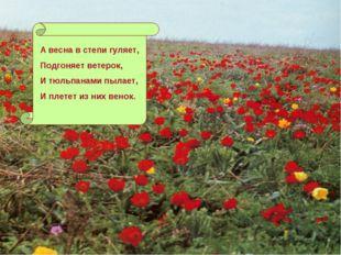 А весна в степи гуляет, Подгоняет ветерок, И тюльпанами пылает, И плетет из н