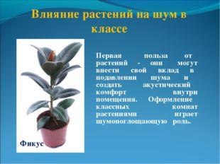 Первая польза от растений - они могут внести свой вклад в подавлении шума и с