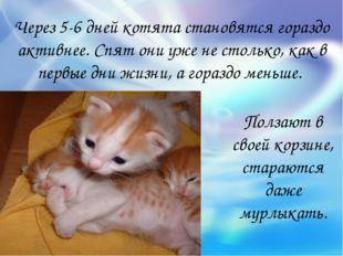 Через 5-6 дней котята становятся гораздо активнее. Спят они уже не столько, к