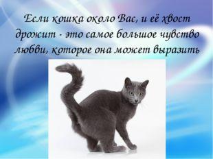 Если кошка около Вас, и её хвост дрожит - это самое большое чувство любви, ко