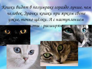 Кошки видят в полумраке гораздо лучше, чем человек. Зрачки кошки при ярком св