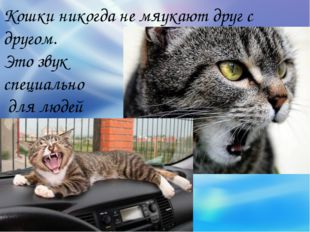 Кошки никогда не мяукают друг с другом. Это звук специально для людей