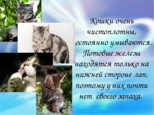 Кошки очень чистоплотны, постоянно умываются. Потовые железы находятся только