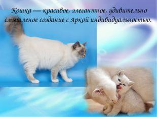 Кошка — красивое, элегантное, удивительно смышленое создание с яркой индивиду