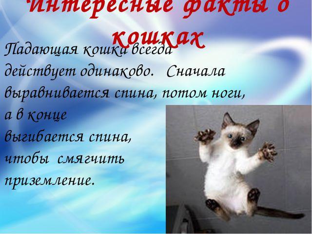 Падающая кошка всегда действует одинаково. Сначала выравнивается спина, потом...