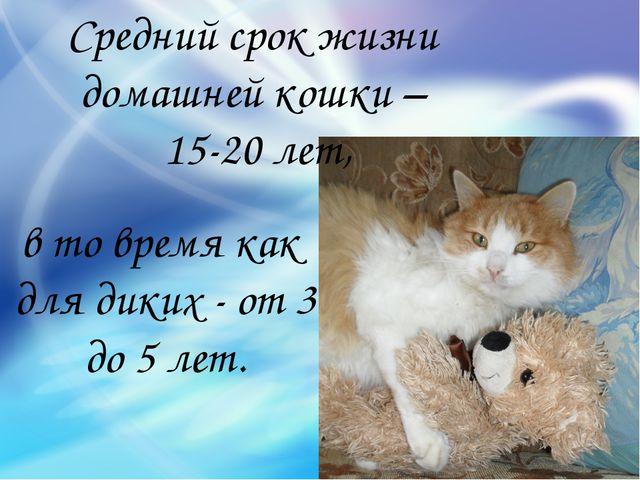 в то время как для диких - от 3 до 5 лет. Средний срок жизни домашней кошки –...