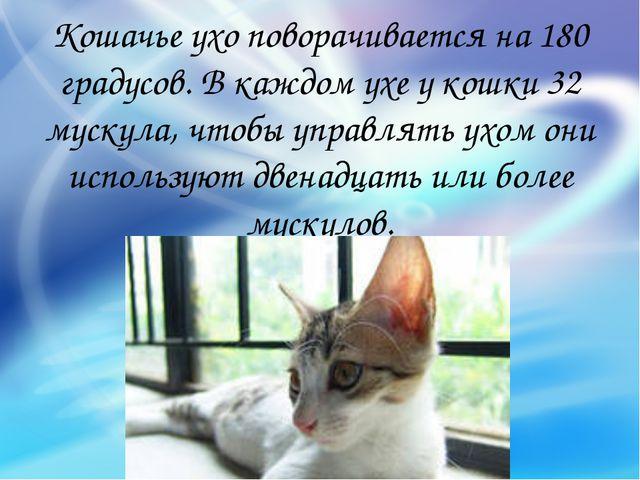 Кошачье ухо поворачивается на 180 градусов. В каждом ухе у кошки 32 мускула,...