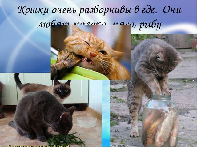 Кошки очень разборчивы в еде. Они любят молоко, мясо, рыбу