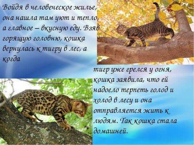 тигр уже грелся у огня, кошка заявила, что ей надоело терпеть голод и холод в...