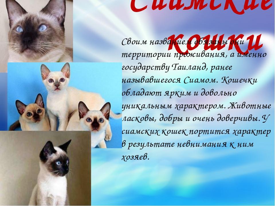 Сиамские кошки Своим названием обязаны они территории проживания, а именно го...