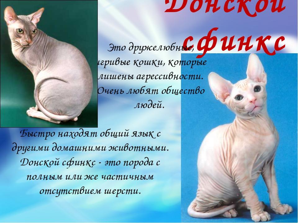 Донской сфинкс Это дружелюбные, игривые кошки, которые лишены агрессивности....