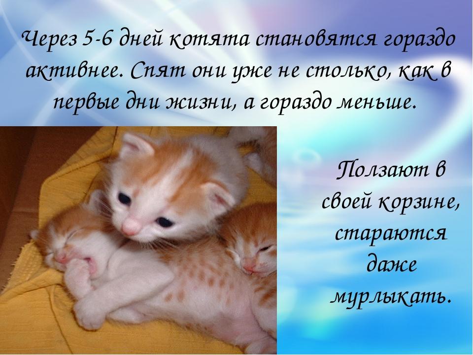 Через 5-6 дней котята становятся гораздо активнее. Спят они уже не столько, к...