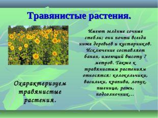 Травянистые растения. Имеют зелёные сочные стебли; они почти всегда ниже дере