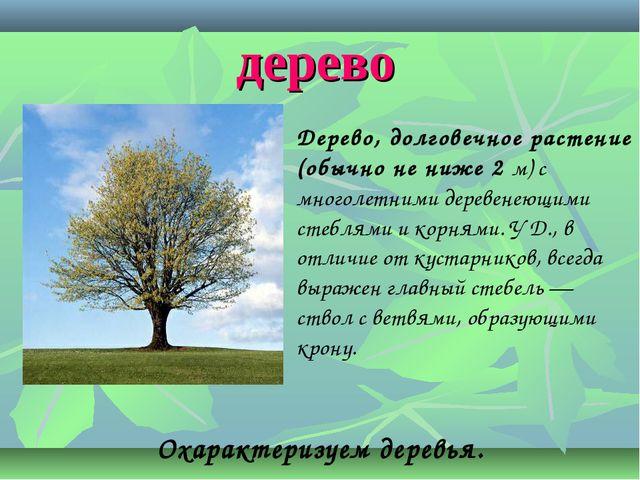 дерево Охарактеризуем деревья. Дерево, долговечное растение (обычно не ниже 2...