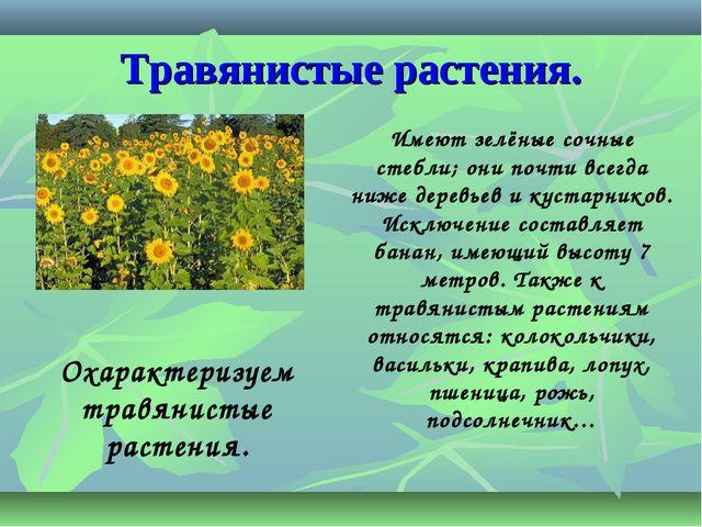 Травянистые растения. Имеют зелёные сочные стебли; они почти всегда ниже дере...