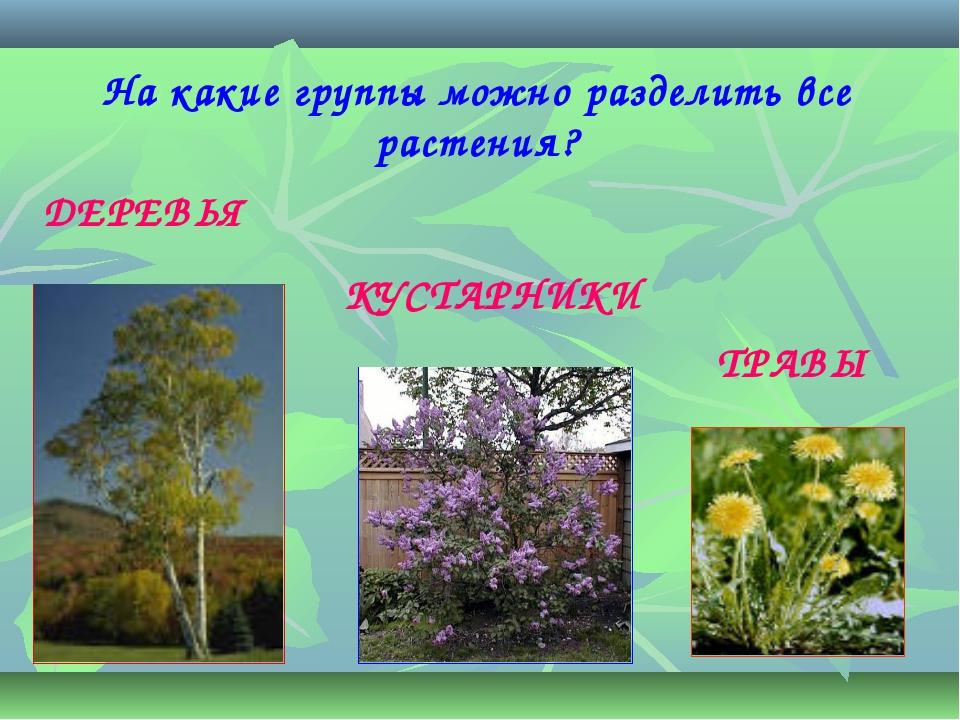 На какие группы можно разделить все растения? ДЕРЕВЬЯ КУСТАРНИКИ ТРАВЫ