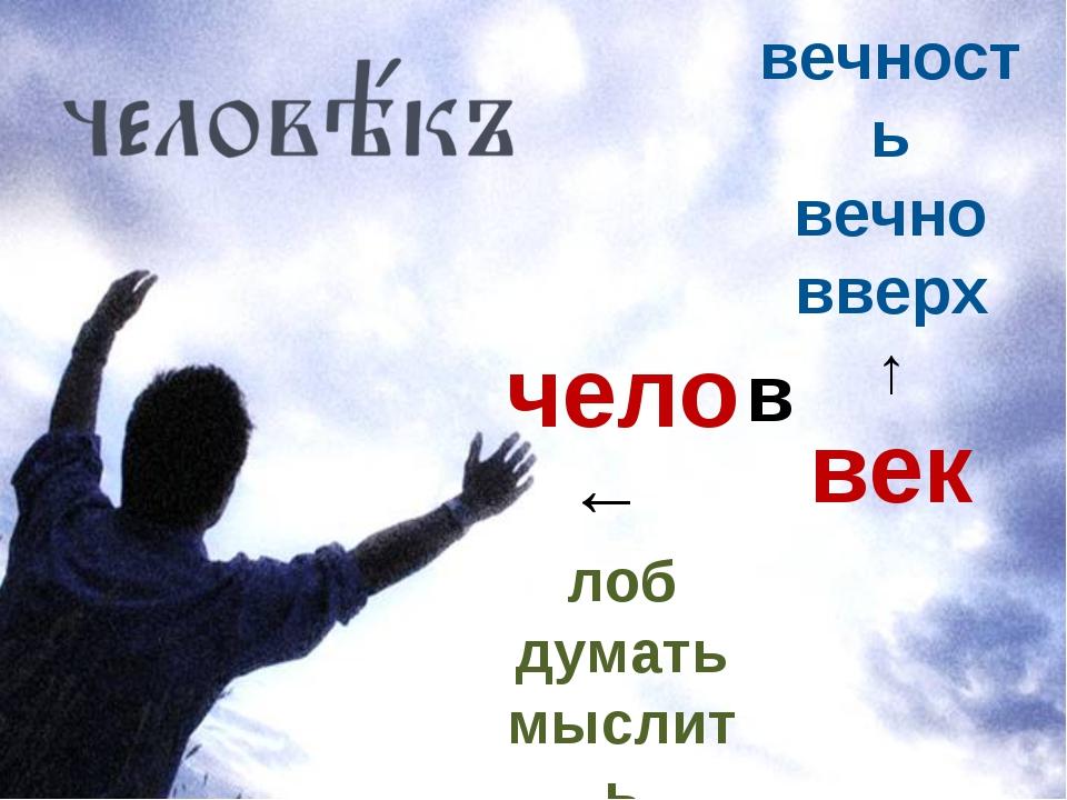 чело ← лоб думать мыслить вечность вечно вверх ↑ век в