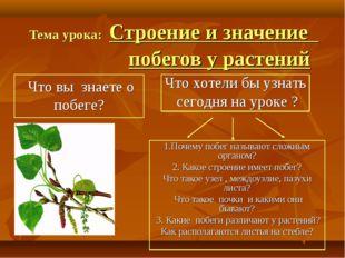 Тема урока: Строение и значение побегов у растений 1.Почему побег называют сл