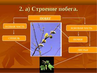 2. а) Строение побега. ПОБЕГ ОСЕВАЯ ЧАСТЬ БОКОВАЯ ЧАСТЬ СТЕБЕЛЬ ЛИСТЬЯ ПОЧКИ
