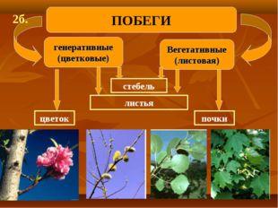 генеративные (цветковые) Вегетативные (листовая) ПОБЕГИ 2б. стебель листья по