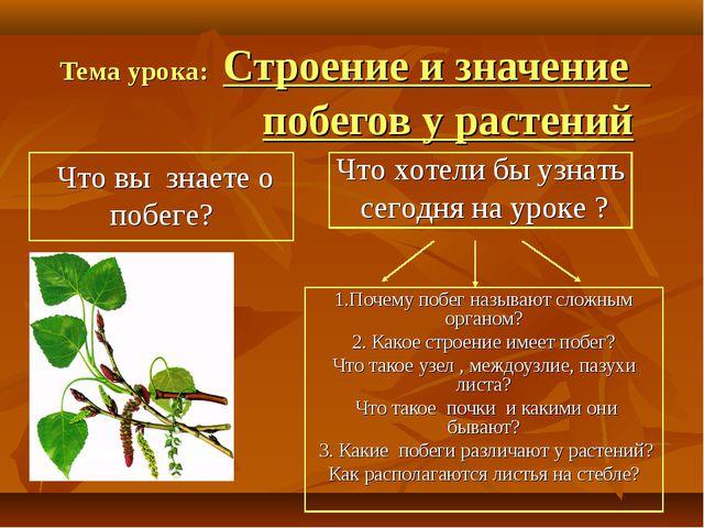 Тема урока: Строение и значение побегов у растений 1.Почему побег называют сл...