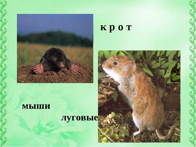 к р о т мыши луговые