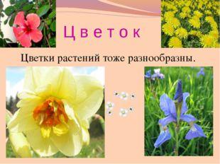 цветение берёзы и черёмухи