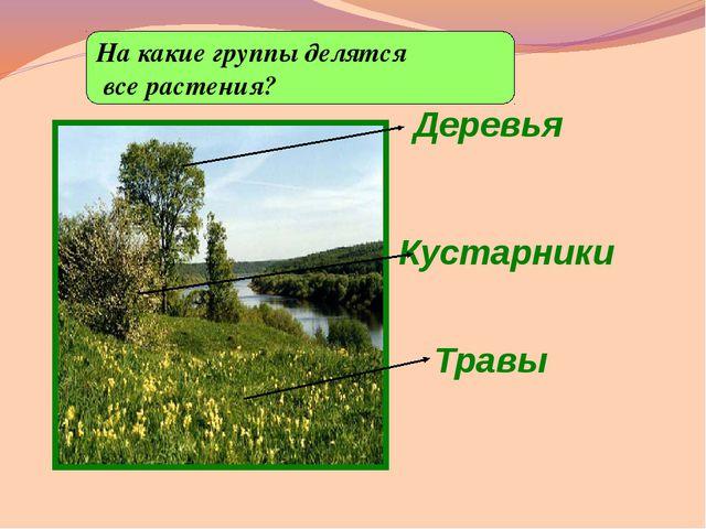 Деревья На какие группы делятся все растения? Кустарники Травы